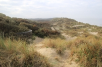 La Dune Marchand : le fin cordon des Flandres. Autour d'un « reste » du mur de l'Atlantique, les oyats sont remplacés par les argousiers (dont les fruits oranges figurent en bas à droite) et en haut à gauche.