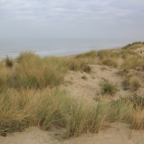 A commencer par la Dune Marchand, l'une des trois dunes de Flandres, classée réserve nationale, car elle recèle plus de 300 espèces, soit la quasi totalité de celles que l'on trouve par ailleurs dans toutes les autres dunes de France.