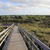 La dune boisée, au Platier d'Oye
