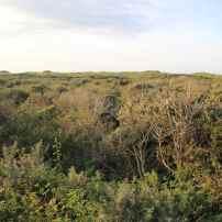 Un mélange de pionnières et de dune boisée