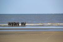 """Des adeptes de char à voile les appellent avec amusement et amicalement """"les pingouins"""". Ce sont les longe-côte de Dunkerque, berceau de la pratique."""