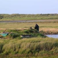 Plusieurs oiseaux d'eau sont chassés : canards col vert ou siffleurs ; sarcelles ; bécassines, bécasseaux maubèche, courlis, huîtriers pies...