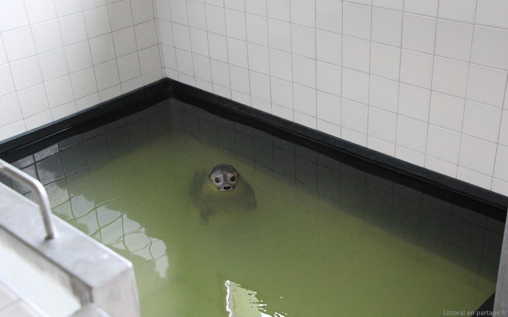Dossier 8 - Les phoques : leur vie, leur sauvegarde (3/6)