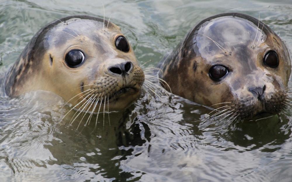 Dossier 8 - Les phoques : leur vie, leur sauvegarde (1/6)
