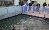 """Guéris , les phoques ont été d'abord """"transvasés"""" du bassin de soin intensif vers une piscine extérieure. Pendant ce laps de temps en piscine, ceux-ci s'engraissent en sorte de constituer les réserves nécessaires pour apprendre à pêcher une fois remis en liberté."""
