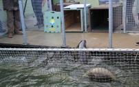 Les phoques sortent.