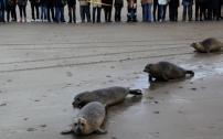 C'est toujours un événement que de remettre en liberté les animaux soignés.